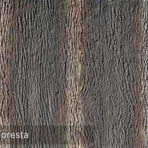 pino foresta 481